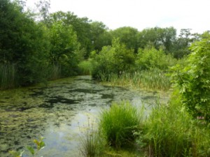 Askham Bog in June © Jane Chapman
