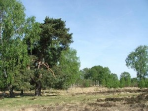 Strensall Common, April 2011 © Peter Reed